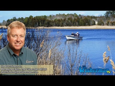 February 22 2018 new jersey delaware bay fishing report for Delaware bay fishing report