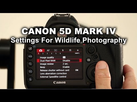 Canon 5D Mark IV - Settings For Wildlife Photography