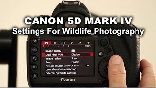 canon 5d mark iv settings for wildlife photography