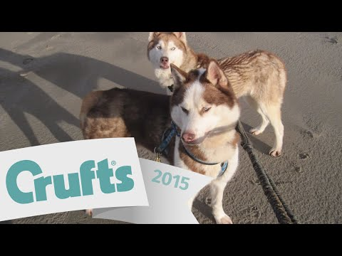 Incredible Story - Rescue Dog qualifies for Crufts - Riley the Irish Husky | Crufts 2015