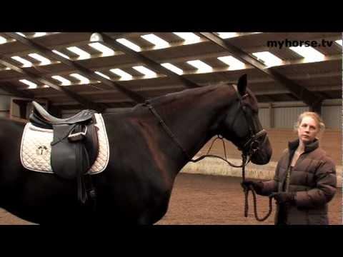Basic Training - Part B - The Body Of The Horse I