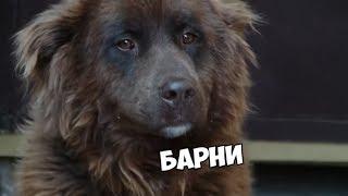 Ищу друга - Как собаке привыкнуть к новому месту - С добрым утром, малыши!