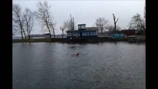 Заплыв после парилки в бане на Спасалке 18 03 17 Адаптированная версия