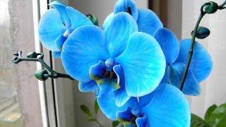 Как пересаживать орхидеи(Орхидеи стали любимицами многих женщин. Часто мы покупаем орхидеи сами или принимаем их в подарок, но не..., 2016-03-28T20:11:53.000Z)