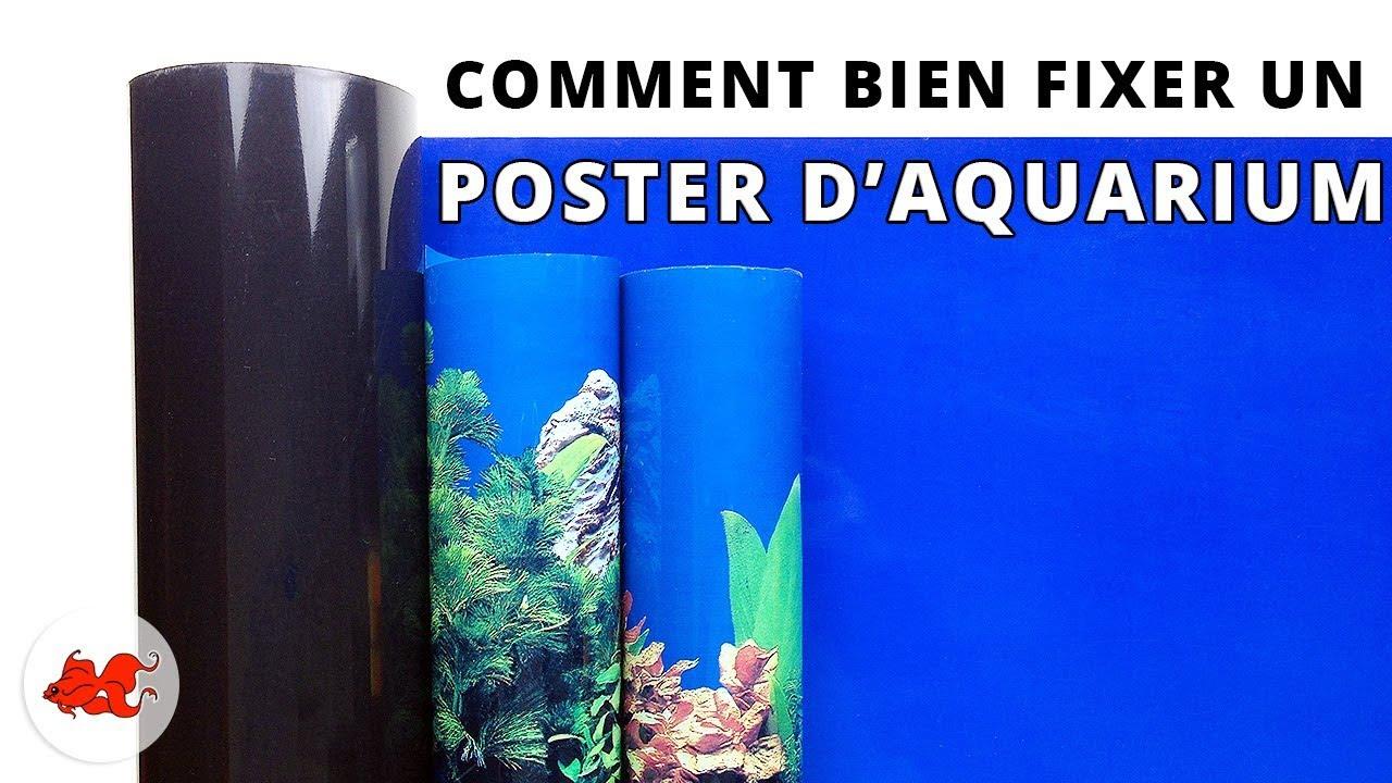Fixer Un Poster De Fond D Aquarium Youtube