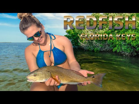 Fishing Our Bay Boat In Crystal Clear Shallow Water! .. Redfish & Snook Florida Keys Inshore Fishing