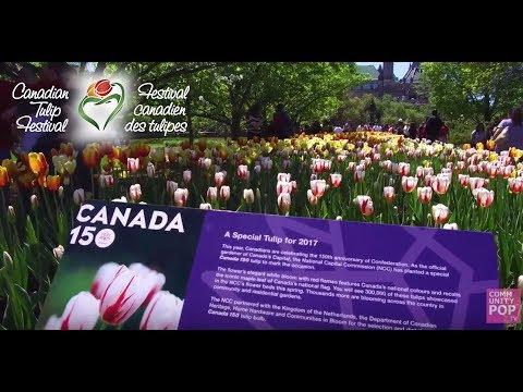 Canadian Tulip Festival | One Tulip One Canada