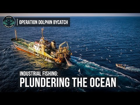 Industrial Fishing: Plundering The Ocean