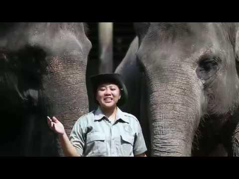 petualangan-di-gembira-loka-zoo