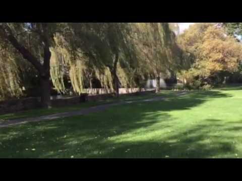 Great Lawn - Cline