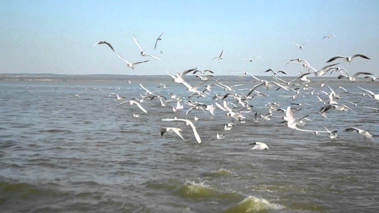Ростов Великий. Озеро Неро. Июнь 2012.