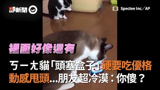ㄎㄧㄤ貓「頭塞盒子」硬要吃優格 動感甩頭...朋友超冷漠:你傻?