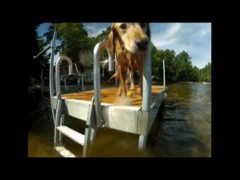Dog climbs swim ladder