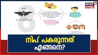 Nipah Virus പകരുന്നത് എങ്ങനെ?   How Does Nipah Virus Spread ?