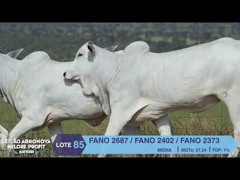 LOTE 85 FANO 2687 X 2402 X 2373
