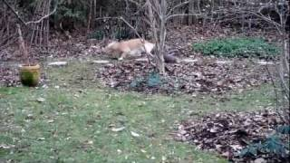 English Cocker Spaniel, Border Terrier, Cavalier King Charles Spaniel In The Garden