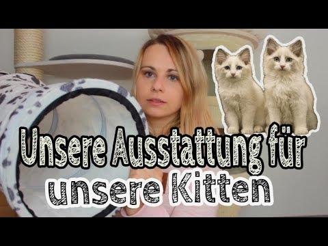 katzenfutter für untergewichtige katzen