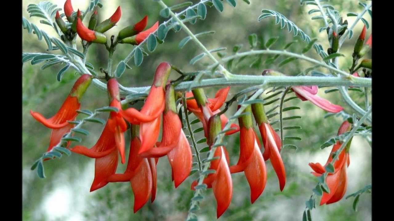 how to stop tropical plants producing seeds