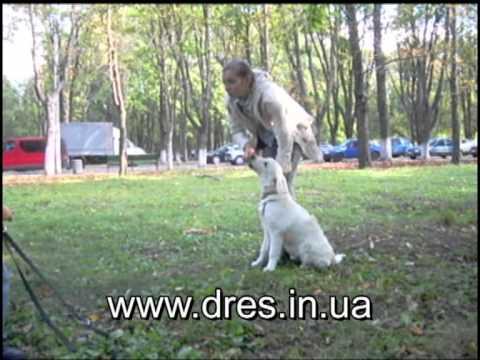 Вопрос: Как научить собаку не приставать к прохожим?