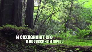 Международный день лесов – 2015 год