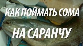 Как ловить сома на саранчу летом. Рыбалка в августе на сома в Астрахани на Волге с квоком(В видео, как ловить сома летом на квок используя в качестве наживки саранчу. Рыбалка на рыбу сом проходила..., 2016-06-17T10:00:02.000Z)