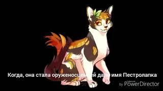 ||Коты Воители|| История Пестролистой~