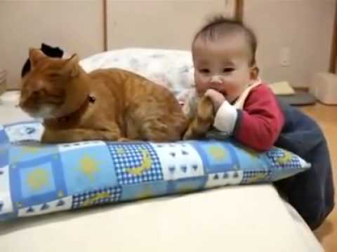 [Yeudongvat.org]Con mèo kiên nhẫn