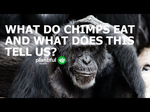 Humans Are Herbivores || Eat Like A Chimpanzee!