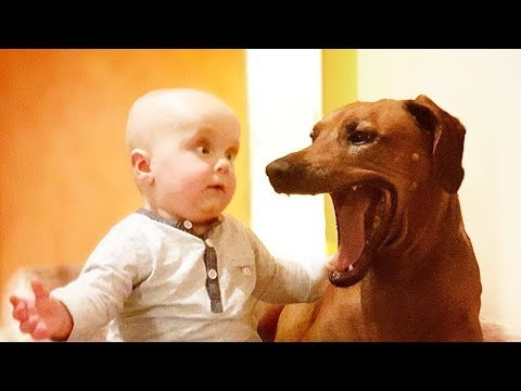Cutest Babies And Dogs Doing Crazy Things Together #3   Cute babies Compilation