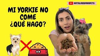 MI YORKIE NO COME¿QUÉ HAGO?/TIPS BY NATALIA OSPINA