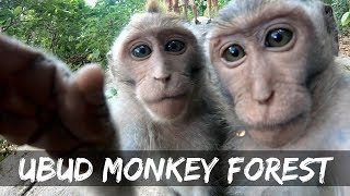 UBUD BALI MONKEY FOREST | TRAVEL VLOG 2018