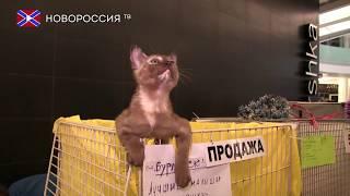 Международная выставка-конкурс кошек в Донецке