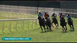 Vidéo de la course PMU PREMIO SOROGAIN RECURSOS HUMANOS (SECUNDA PARTE)