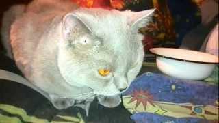 Кот ест семьки / Cat eats sunflower seeds