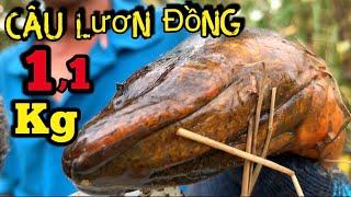 Câu trúng lươn cồ đầm hoang 1,1kg kéo cong lưỡi
