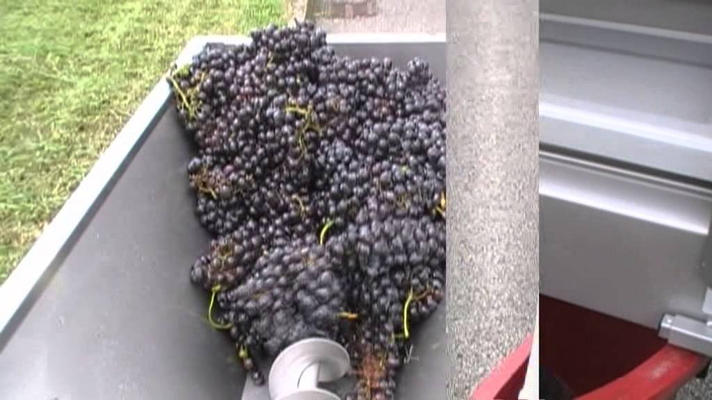 Приготовление натурального виноградного сока.mp4 - YouTube