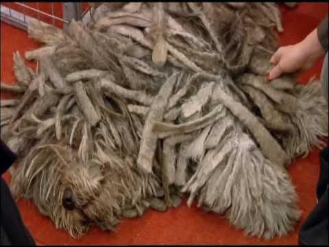 Kennel Club finally address the Dog Breeding Question