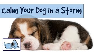 Relax your Dog During Thunderstorms - Music to Calm Stressed Dogs