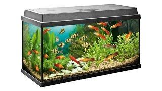 Аквариум дома, рыбки, оборудование.(Аквариум для дома, оборудование, рыбки. Как установить аквариум дома, какое оборудование использовать,..., 2015-07-05T18:42:31.000Z)