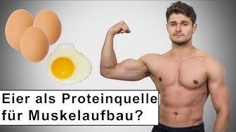 Eier die beste Proteinquelle für den Muskelaufbau!?