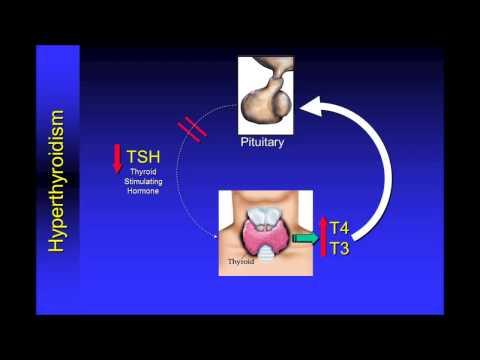 Understanding Thyroid Function Tests