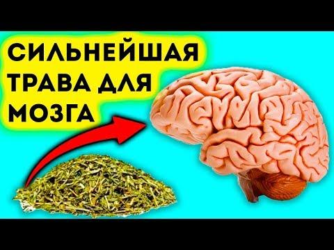 Сильнейшая трава для мозга, сердца, сосудов, почек, суставов, кожи, волос и не только...