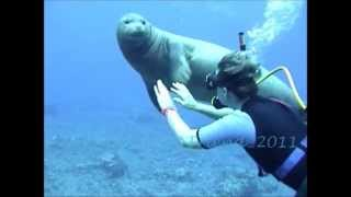 Hawaiian Monk Seal R307 @ Molokini Island Maui Hawaii Part 3