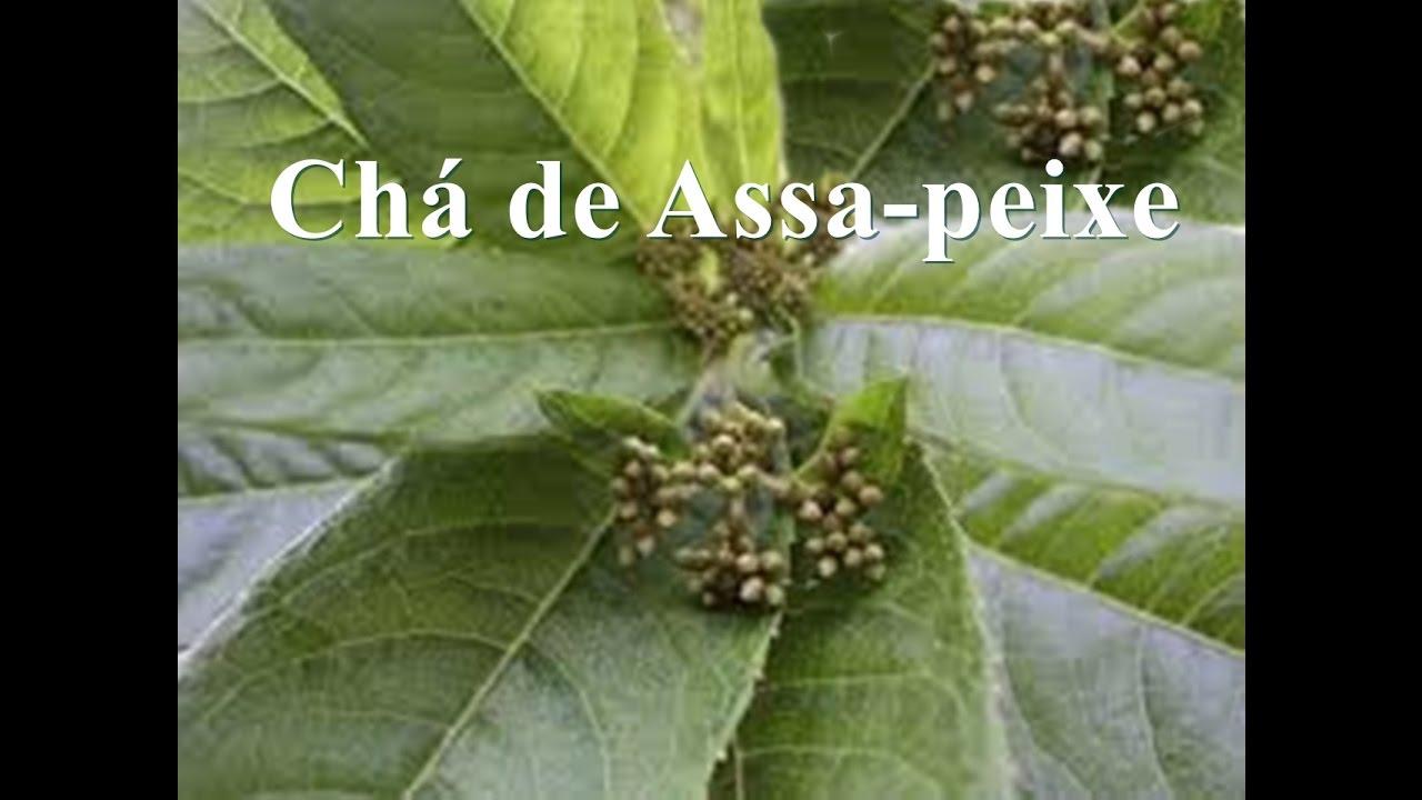 Resultado de imagem para ASSA-PEIXE