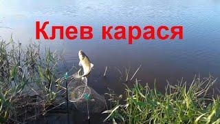 Клев карася на удочку на перловку Рыбалка на поплавок На что клюет карась