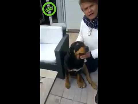 Wonderbaar Rottweiler speelt Duitse Herder - YouTube IB-38