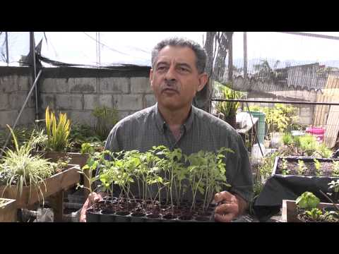 Urban Farming Hydroponics Project- Guatemala City