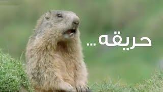 اضحك علي صور و تعليقات حيوانات حديقة حيوان الجيزة بعد حادث الحريق الضخم | الهري اليومين دول ٧