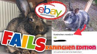 ebay Kleinanzeigen Fails  Kaninchen Edition