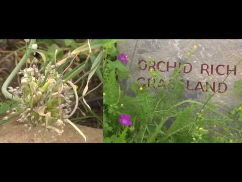 GeoparkLIFE: Visitor Onsite Interpretation - The Burren Nature Sanctuary